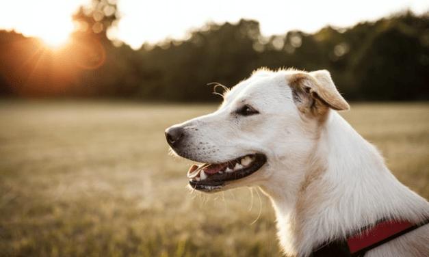 Skal du også have hund? – Her er de bedste ting at vide