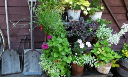En plantage i baghaven – hvilke planter skal jeg plante?